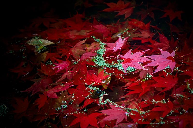 IMAGE: http://www.warrenwilliams.co.nz/2008/NOV_0127.jpg