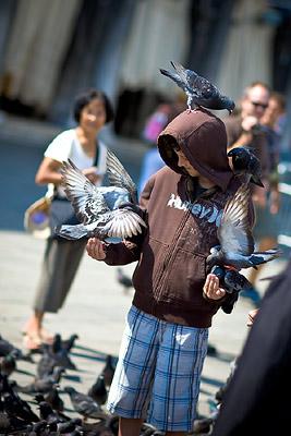 Pigeons overun Venice