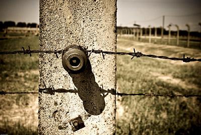 Barbed Wire Fence Auschwitz Birkenau