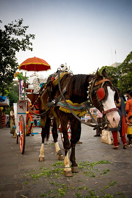 Horse in Mumbai, India