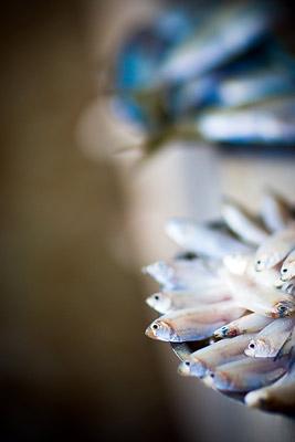 Fish Market, Panjim, Goa