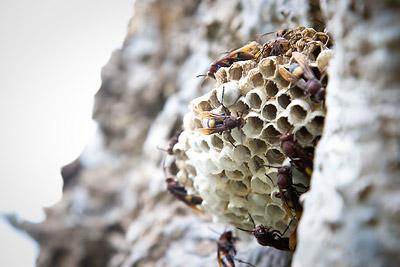 Wasps India