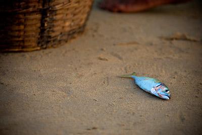 Baga Fishermen, Goa