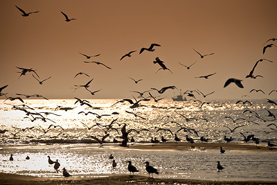 Morjim Birds Sunset