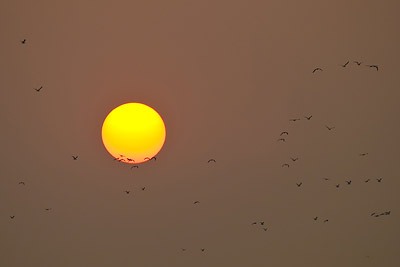 Morjim Sunset Birds Silhouette