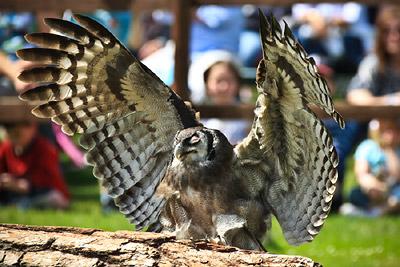 Warwick Castle Owl
