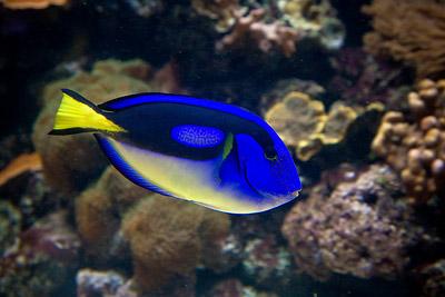 Dory - Finding Nemo