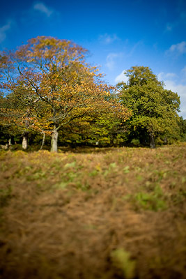 Tilt Shift Effects TS-E 24mm