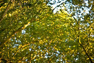 Hampstead Heath green trees