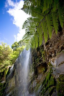 Mokoroa Falls, Waitakere